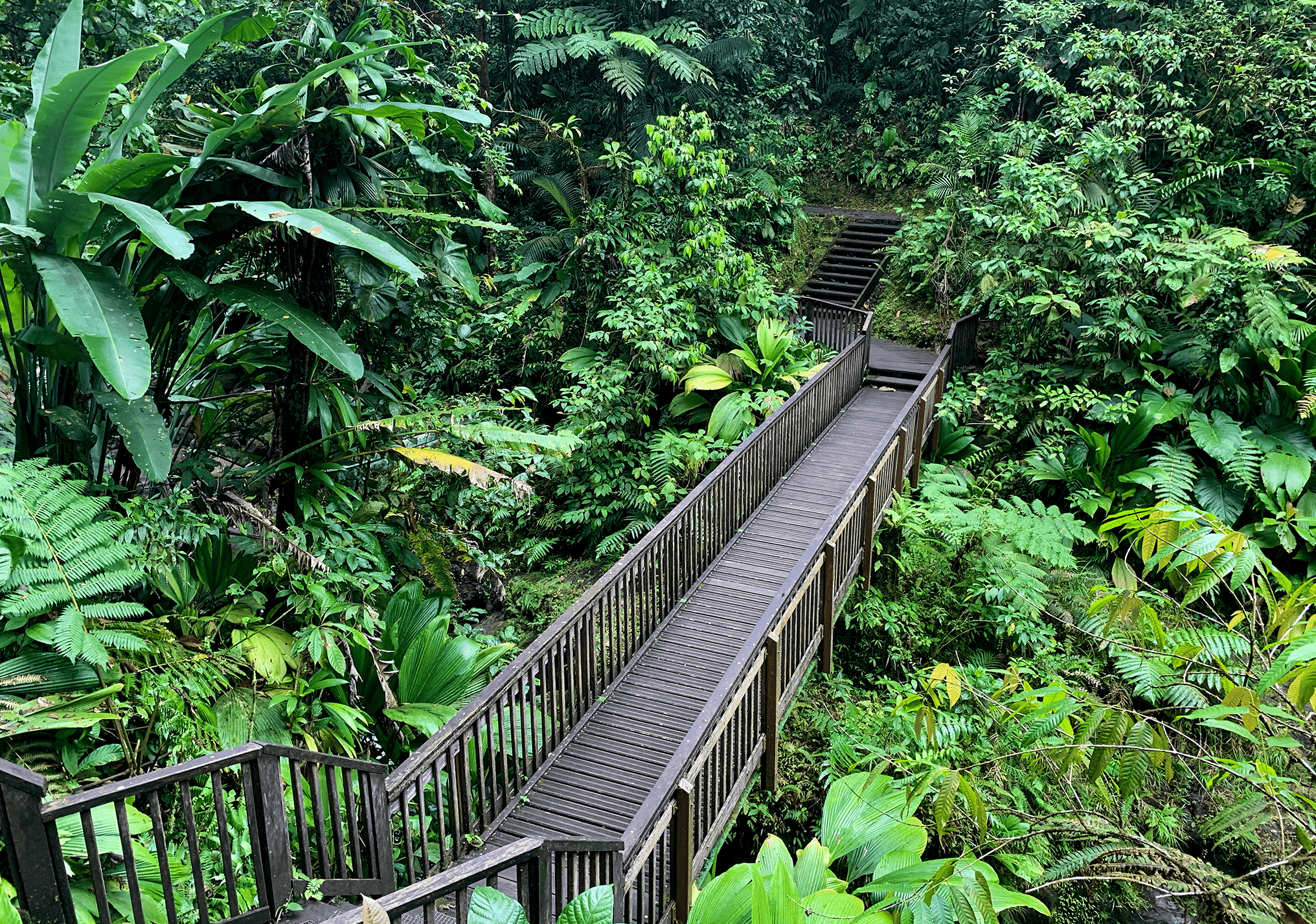 escaliers-cascade-chute-du-carbet-basse-terre-guadeloupe