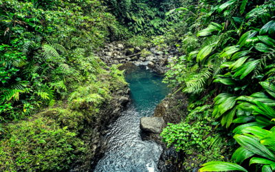 Basse-Terre | Guadeloupe